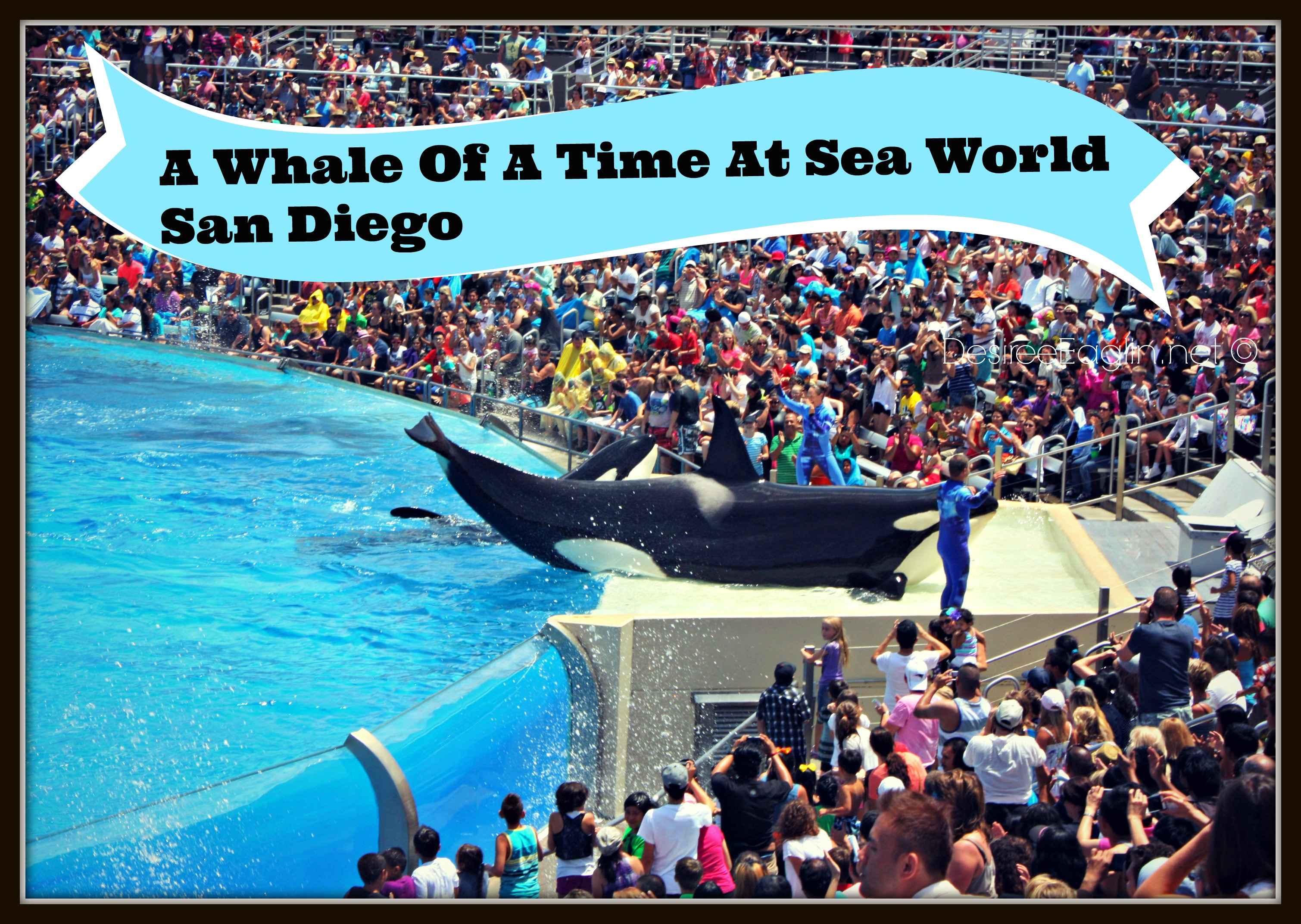 a whale of a time at sea world san diego