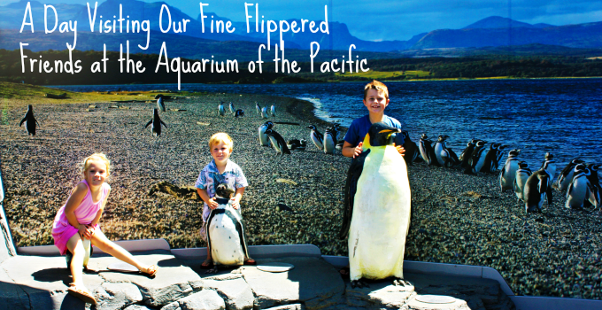 A Day Visiting Our Fine Flippered Friends at the Aquarium of the Pacific