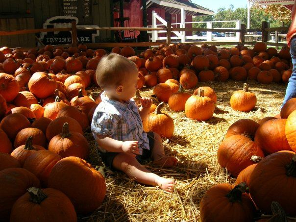 Our Annual Irvine Park Railroad Pumpkin Patch Picture The Funny Mom Blog